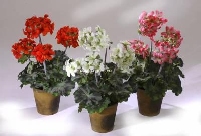 Светолюбивые комнатные растения фото